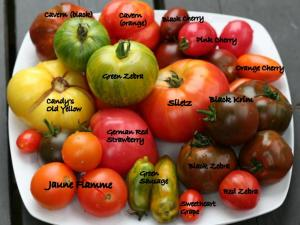 What is an Heirloom Tomato? An heirloom is generally considered to be a variety that has been passed down, through several generations of a family because of it's valued characteristics.