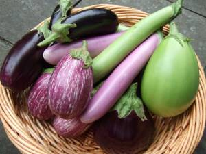The iron, calcium and other minerals in eggplant supply the essential nutrients required by the body.  All this, while relishing a highly flavorful veggie, is a good deal, indeed! Stuff, grill, bake, roast, stew your eggplants—they're delicious!