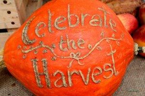 harvest-pumpkin2