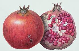 One of the oldest known fruits, found in writings and artifacts of many cultures and religions, the pomegranate (punica granatum) is an original native of Persia. This nutrient dense, antioxidant rich fruit has been revered as a symbol of health, fertility and eternal life.