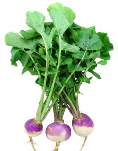 Mashed Turnip Recipe: Peel, wash, and quarter turnips. Boil 35-45 minutes or until tender. Strain and rinse cooked turnips. Place in large mixing bowl and use fork to break up turnips into smaller bits. Add milk and butter. Blend to desired consistency. Add salt and pepper to taste.