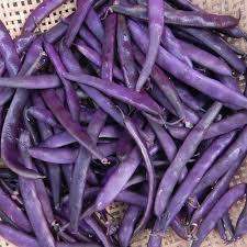 Wondering how to cook purple beans? Try out this recipes for bean and potato salad: http://honestcooking.com/purple-yard-bean-potato-salad/