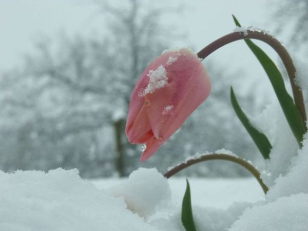 flower-snow-1-1545959-640x480
