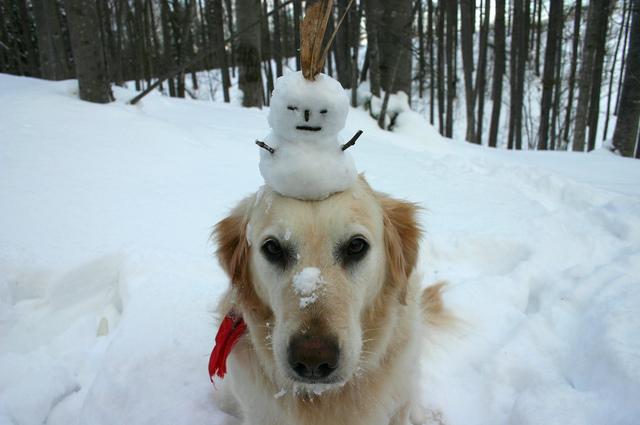 shiro-with-snowman-1368806-640x425