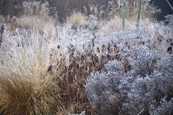 Frank-Heijligers-Dutch-Winter-Garden-Grasses-9